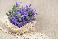 Purpurrote Blumen mit Spitze Lizenzfreie Stockfotos