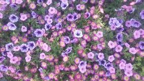 Purpurrote Blumen-Tapete lizenzfreie stockfotos
