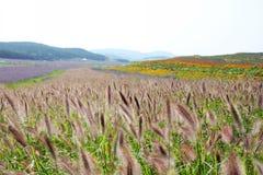 Purpurrote Blumen und bitteres fleabane Gras Lizenzfreie Stockfotografie