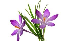 Purpurrote Blumen und Blätter Stockfotos