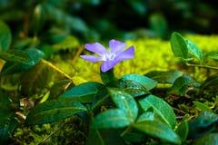 Purpurrote Blumen- und Grünblätter stockbild