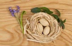 purpurrote Blumen und Nüsse im Nest stockbild