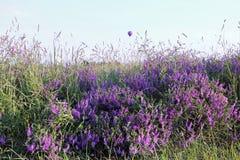 Purpurrote Blumen und purpurrotes baloon stockfotografie