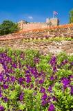 Purpurrote Blumen und Schloss Stockfotografie