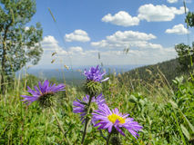 Purpurrote Blumen vor Bergblick stockfotos