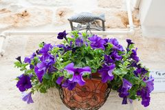 Purpurrote Blumenanlage in einem Glas Stockfoto