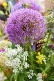 Purpurrote Blumenanlage im botanischen Garten Stockfoto