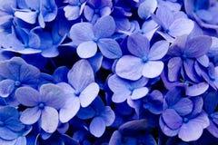 Purpurrote Blumenbeschaffenheitsnahaufnahme Stockfotografie