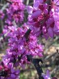 Purpurrote Blumenblätter Lizenzfreie Stockfotos