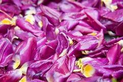 Purpurrote Blumenblätter Stockfoto