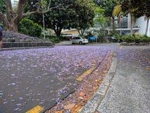 Purpurrote Blumenblätter auf der Straße Stockfoto