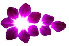 purpurrote Blumenblumenblätter Stockbild