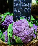 Purpurrote Blumenkohle für Verkauf Lizenzfreies Stockbild