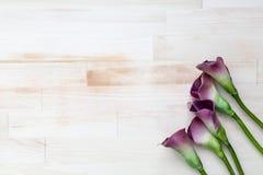 Purpurrote Callalilien auf hellem hölzernem Hintergrund Stockbilder