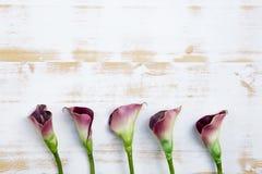 Purpurrote Callalilien auf weißem hölzernem Hintergrund Stockfoto