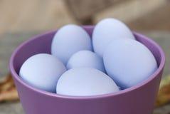 Purpurrote Eier Stockfotografie