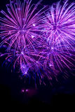 Purpurrote Feuerwerke Stockbild
