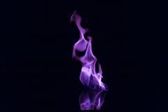 Purpurrote Flammen lokalisiert Stockbild
