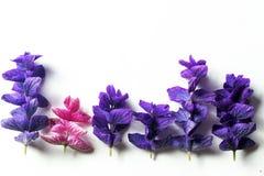 Purpurrote Fliederblätter auf einem weißen Hintergrund Stockbilder
