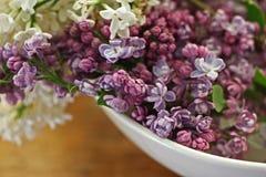 Purpurrote Fliedern in der weißen Schüssel Stockbild