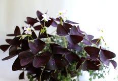 Purpurrote Flora Stockfotografie