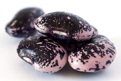 Purpurrote Gartenbohnen lizenzfreie stockfotografie