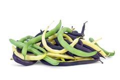 Purpurrote, grüne und gelbe Wachs-Brechbohnen Stockfotografie