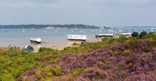 Purpurrote Heide mit Ansicht zu Brownsea-Insel Poole-Hafen Dorset England Großbritannien Stockbilder