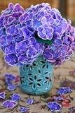 Purpurrote Hydrangea-Blumen Stockfoto