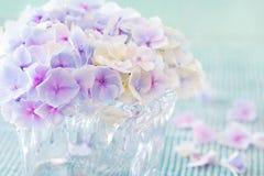Purpurrote Hydrangea-Blumen Stockfotos