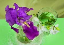 Purpurrote Iris und die weißen Glocken der Chemikalie in einem Glasbehälter Lizenzfreies Stockbild