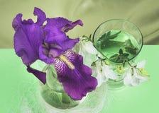 Purpurrote Iris und die weißen Glocken der Chemikalie in einem Glasbehälter Stockfotos