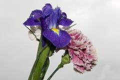 Purpurrote Iris und Gartennelken Lizenzfreies Stockfoto