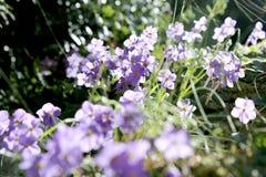 Purpurrote kleine Blumen in der Natur Stockbilder