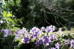 Purpurrote kleine Blumen in der Natur lizenzfreies stockfoto