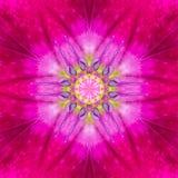 Purpurrote konzentrische Blumen-Mitte. Mandaladesign lizenzfreies stockbild