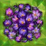 Purpurrote Krokusblumen mit Dreieckhintergrund stock abbildung