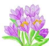 Purpurrote Krokusse, malend Lizenzfreie Stockbilder