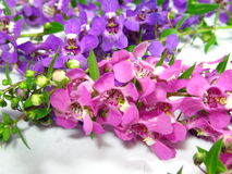 Purpurrote Lavendelblumen stockfotografie