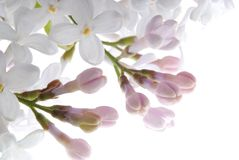 Purpurrote lila Blume stockbild