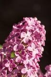 Purpurrote lila Blume auf der sonnigen Helligkeit Lizenzfreie Stockfotos
