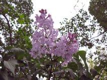Purpurrote lila Blumen Stockfoto
