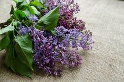 Purpurrote lila Blumen als Hintergrund Lizenzfreies Stockbild