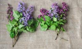 Purpurrote lila Blumen als Hintergrund Lizenzfreies Stockfoto