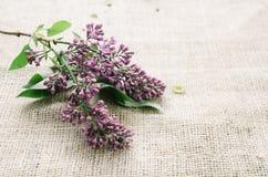 Purpurrote lila Blumen als Hintergrund Stockfotografie