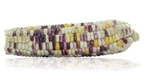 Purpurrote Mais-Körner Stockfotografie