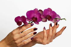 Purpurrote Maniküre und Orchidee lizenzfreie stockfotografie