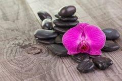Purpurrote Mottenorchidee und schwarze Steine auf verwitterter Plattform Stockfotos