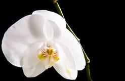 Purpurrote Orchidee der Unschärfe unter der Sonne Lizenzfreie Stockfotos