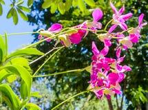 Purpurrote Orchidee der Unschärfe unter der Sonne Stockfotografie